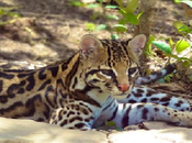Fauna Flora Silvestre Boliviana