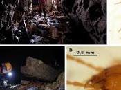 Nuevo coleóptero subterráneo descubierto Cantabria