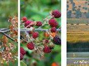 Curso especialista ecoturismo interpretación medio natural