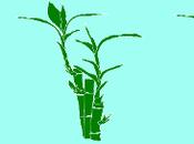 cambio personal bambú japonés