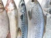 ¿Cuál pescado sano?