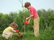 importancia plantar árboles