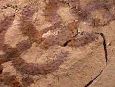 Encontrado eslabón perdido entre gusanos artrópodos. cactus andante
