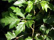 Plantas colgantes para interior