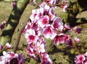 Primer primavera