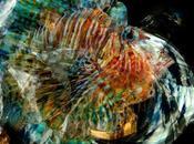 Pesce Volante Premio Arte Novara
