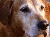 Conoce Historias Estos Perros Héroes Arriesgaron Vida Para Salvar Otros