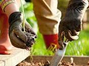 consejos prácticos para empezar propio huerto orgánico