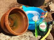 conveniente limpiar macetas contenedores antes volver plantar ellos
