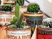 Decoración verde: Cactus hogar.