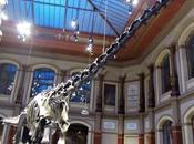 Neurociencia para época dinosaurios