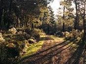 bosques valen hasta veces cuesta conservarlos