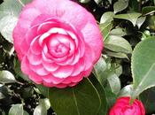 tipos flores comestibles