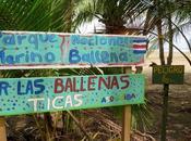 Marino Ballena, cola atrae ballenas