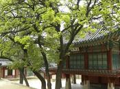 Corea sur: seoul, palacio changdeokgung jardin secreto