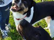 Bizcochitos exprés light para perro humano