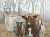 familia granja. Fotografías animales como usted visto antes