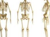 Anatomía humana Sistema locomotor