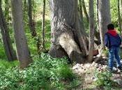 Miércoles Mudo: Buscando pitufos bosque