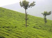 india: kumily,