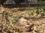 Intenso calor esta matando pájaros Ciudad Valles