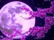 Claro luna Debussy