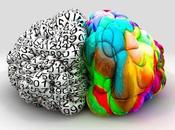 ¿Por cerebro está dividido?
