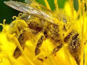 Abejas sobre amarillo bees yellow.