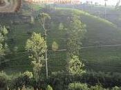 Plantaciones Ceylon Lanka