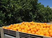 Comprar fruta line, garantía máxima frescura