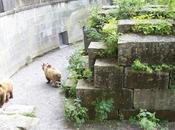 paseo pequeña Berna