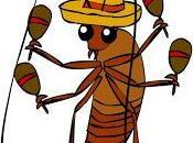 Cucaracha experience. Para todo primera vez.