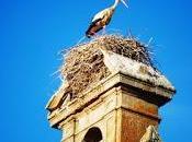 enseña nido cigüeña