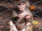zoológico como institución... imágenes obsenas... demás breve crítica...