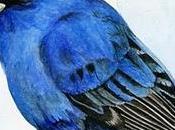 Selección aviar febrero