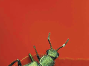 mundo escarabajos