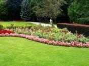 Puesta apunto Jardín Verano