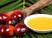 aceite palma comida Verdades mentiras Nutrición