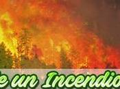 Causas incendio forestal