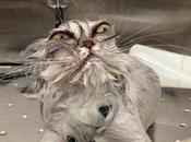 ¿por gatos odian agua?