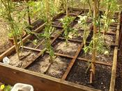 abonado fertilizante orgánico hortalizas bancales huerto