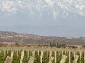 Finca Agostino: bivarietales suman oferta buenos vinos argentinos Quebec