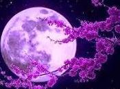 canto luna