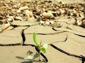 evolución acelera calentamiento global