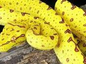 Veneno serpiente: Beneficios para piel