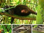 Cuatro parques nacionales Costa Rica. ¡Pura vida!