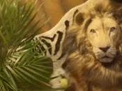 """adorable """"hombre león"""" protagoniza nuevo spot IKEA Reino Unido"""