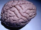 capacidad mental adolescentes aumenta mientras cerebro encoge
