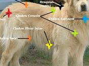 Descubre Reiki Sistema Chakras Animales