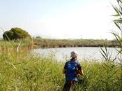 Estany Remolar Marismas Filipines. Delta Llobregat